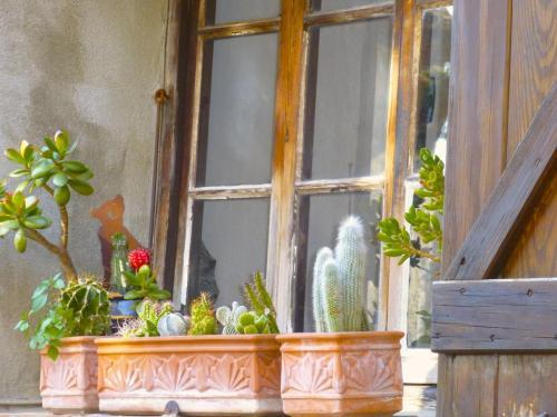 cagnes-cacti